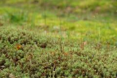 Zielony mech Zdjęcie Stock
