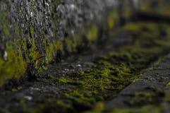 Zielony mech dorośnięcie na ścianie Fotografia Stock