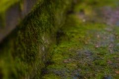 Zielony mech dorośnięcie na ścianie Zdjęcia Royalty Free