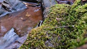 Zielony mech dorośnięcie w skale obraz stock