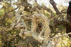 Zielony mech drzewo Zdjęcia Royalty Free