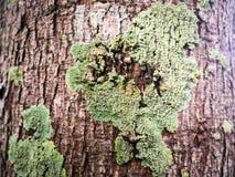Zielony mech i liszaj na drzewie zdjęcie stock
