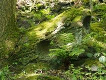 Zielony mech i liszaj zakrywaliśmy rockowego otaczającego paprociami i roślinami w jaskrawym wiosny świetle słonecznym na lasowej fotografia stock