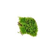Zielony mech na białym tle Obraz Stock