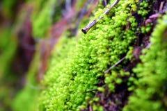 Zielony mech na brudzie Fotografia Royalty Free