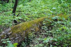 zielony mech na drzewie w lesie zdjęcie stock