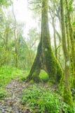 Zielony mech na drzewnych bagażnikach Fotografia Royalty Free