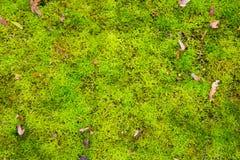 Zielony mech natury tło Eco, ekologia, przetwarza, iść zielony, środowiskowy pojęcie fotografia royalty free