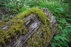 Zielony mech r na nazwie użytkownika las Obraz Stock
