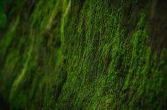 Zielony mech r na skale w lesie obraz stock