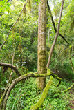 Zielony mech w lesie Obrazy Stock