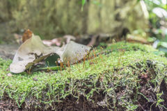 Zielony mos Zdjęcie Royalty Free