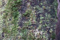 Zielony mos na drzewa i lasów wizerunku tle obrazy stock