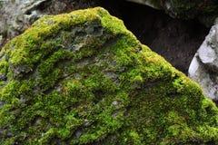 Zielony mos tło, Zielony mos Zdjęcie Royalty Free