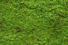zielony moss obraz royalty free