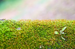 zielony moss Zdjęcia Royalty Free