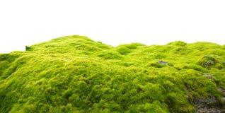 zielony moss Obraz Stock