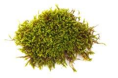 zielony moss Fotografia Royalty Free
