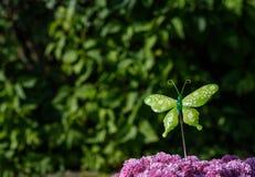 Zielony motyl w słońcu Zdjęcia Royalty Free