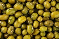 Zielony Mung fasoli tło Makro- texture Jarska proteina fotografia stock