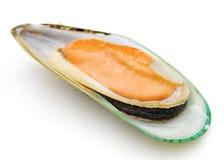 zielony mussel obrazy royalty free