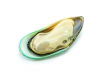 Zielony mussel Obraz Royalty Free