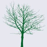 zielony nagi drzewo Obrazy Stock