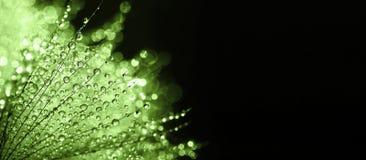 Zielony natura sztandar Zdjęcie Royalty Free