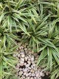 Zielony natura wzoru tła pojęcie Obraz Stock