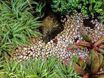 Zielony natura wzoru tła pojęcie Zdjęcie Stock