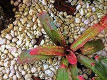 Zielony natura wzoru tła pojęcie Fotografia Stock