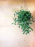 Zielony natura wzoru tła pojęcie Zdjęcie Royalty Free