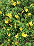Zielony natura wzoru tła pojęcie Zdjęcia Royalty Free