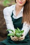 zielony naturalne Zdjęcia Stock