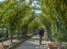 Zielony naturalny tunel rośliny i kwiaty zdjęcia royalty free