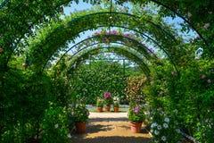 Zielony naturalny tunel rośliny i kwiaty fotografia stock