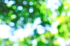 Zielony natury Bokeh tło Zdjęcia Stock