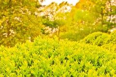 Zielony natury tła krajobraz obrazy royalty free