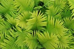 Zielony natury tło obrazy stock
