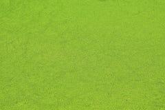 Zielony natury tło nadwodne algi, wodny wort obraz stock