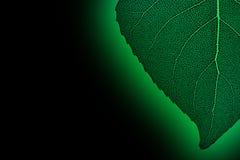 Zielony neonowy liść Fotografia Stock