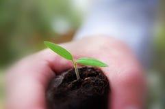 zielony nowego życia. Zdjęcia Royalty Free