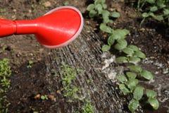 zielony nowy dolewania wody Obrazy Royalty Free
