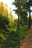Zielony obfitolistny las i światło słoneczne w ranku zdjęcia stock