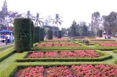 zielony ogród czerwonawego Fotografia Stock