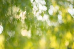 Zielony ogrodowy bokeh tło, obiektyw plama Zdjęcia Stock