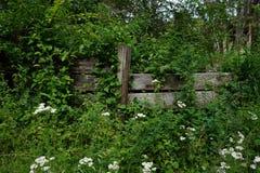 Zielony ogrodzenie Obrazy Royalty Free
