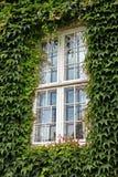 Zielony okno Fotografia Stock