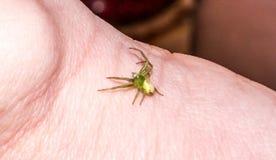 Zielony pająk Fotografia Royalty Free