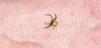 Zielony pająk Obraz Royalty Free